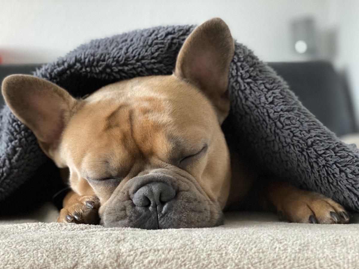 寝すぎ?寝てなさすぎ?愛犬の睡眠時間は?